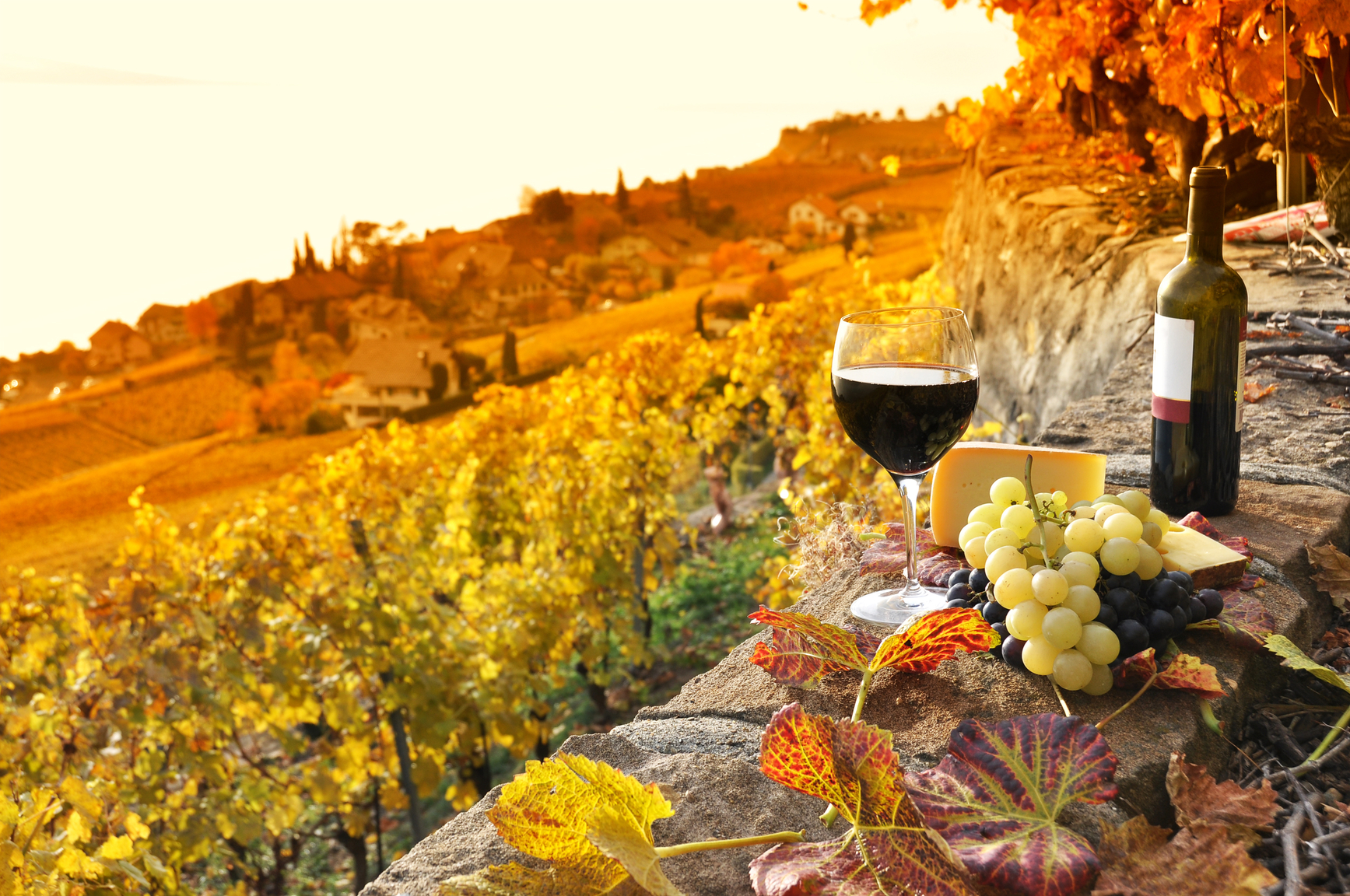 Winemaking In Tuscany The Celebrities Dream Letitwine