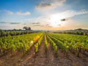 Grandi aziende vinicole