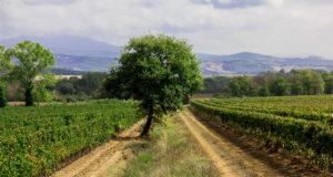 Gavorrano, Toscana, Italia