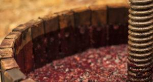 fermentazione vino