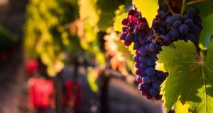 vino e territorio